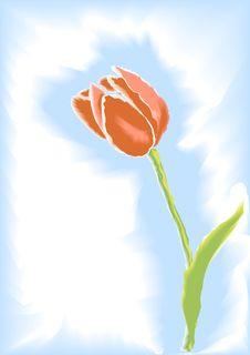 Free Tulip Stock Photo - 9224440