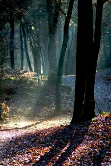 Free Ray Of Light Stock Photography - 9225582