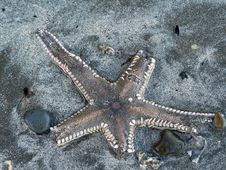 Free Old Stafish On The Beach Royalty Free Stock Images - 9226109