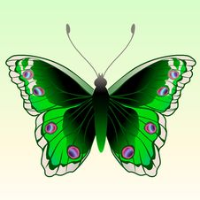 Free Butterfly Royalty Free Stock Photos - 9226438