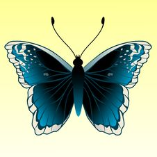 Free Butterfly Royalty Free Stock Image - 9226836