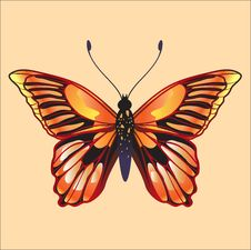 Free Butterfly Stock Image - 9227101