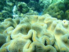 Free Soft Coral Royalty Free Stock Photos - 9228978
