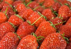 Free Fresh Strawberry Closeup Royalty Free Stock Photography - 9229507
