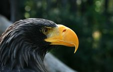 Free Eagle Stock Photo - 9229830