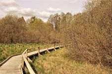 Free Forest Boardwalk Royalty Free Stock Photo - 92238045