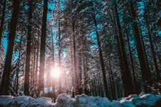 Free Sunrise Seen Through Forest Trees Royalty Free Stock Photo - 92238675