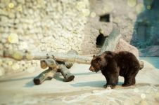 Free Brown Bear Stock Images - 9231844
