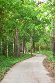 Road In Tropical Forest Royalty Free Stock Photos