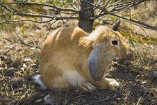 Free Rabbit Stock Images - 9236554