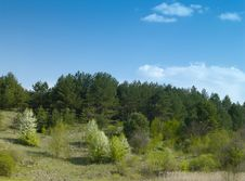 Free Spring Forest Royalty Free Stock Photography - 9237017