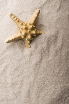 Free Shell On Sand Stock Images - 9237534