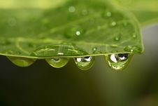 Free Drop On The Leaf Royalty Free Stock Photos - 9237838