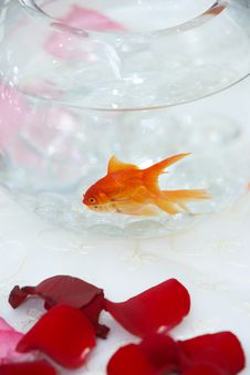 Free Goldfish In A Fish Bowl Stock Photo - 9238420