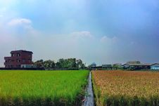 Free 63/365 Color Rice Paddy Stock Images - 92329844