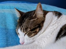 Free Sleepy Girl Royalty Free Stock Images - 92330129