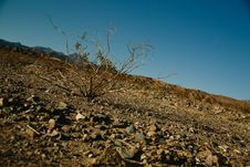 Free Green Leaf Tree On Brown Rock Field Stock Images - 92330604