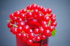 Free Redcurrant Berries Stock Image - 92330661