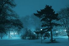 Free City Park At Winter Royalty Free Stock Images - 92331099