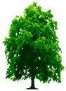 Free Tree Royalty Free Stock Photo - 9242245