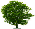 Free Tree Royalty Free Stock Images - 9242319