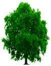 Free Tree Royalty Free Stock Photo - 9242335