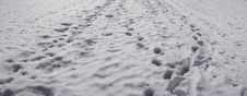 Tracks In Snow Royalty Free Stock Photography