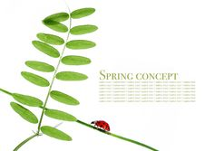 Free Flora And Ladybird Royalty Free Stock Photography - 9240627