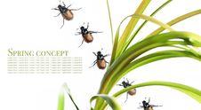 Flora And Beetles Stock Photos