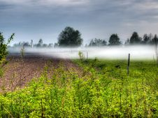 Fogginess In The Field Stock Images