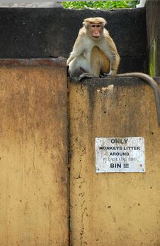 Free Only Monkeys Litter Around Royalty Free Stock Image - 9241316