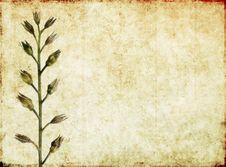 Free Background Image With Earthy Texture Stock Images - 9242004