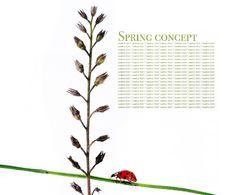 Free Spring Royalty Free Stock Photos - 9244308