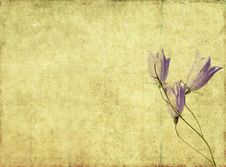 Free Background Image With Floral Elements Royalty Free Stock Photography - 9245367