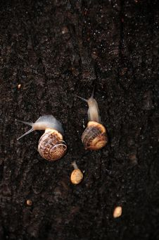 Free Snails Stock Image - 9246351