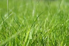 Free Light Green Grass Stock Photography - 9248222