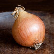 Free Onion Royalty Free Stock Photos - 9249188