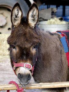 Free Donkey Stock Images - 9249394