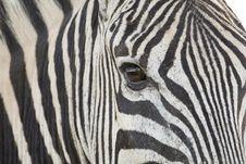 Free Closeup Of Zebra Stock Images - 9249674