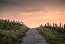 Free Grey Path Way Between Green Grass During Daytime Royalty Free Stock Photography - 92427387