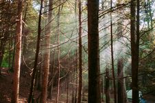 Free Bare Trees Surrounded By Green Leaved Trees In Forest During Daytime Stock Images - 92427554