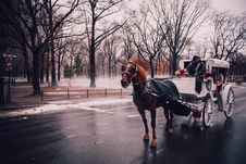 Free Horse Buggy On Street Royalty Free Stock Images - 92428019