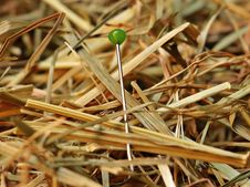 Free Green Pin On Brown Hay Stock Photography - 92428312