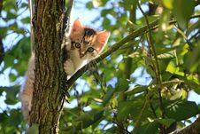 Free Low Angle View Of Cat On Tree Stock Photos - 92428533