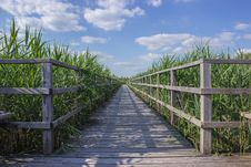 Free Boardwalk Through A Field Of Corn  Royalty Free Stock Image - 92460096