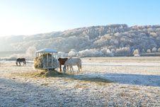 Free Horses Feeding On Hay On Pasture Royalty Free Stock Photos - 92460248