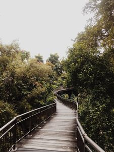 Free Forest Boardwalk Stock Photography - 92460342
