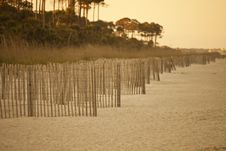 Free Erosion Fence On Deserted Beach Royalty Free Stock Photography - 9250437