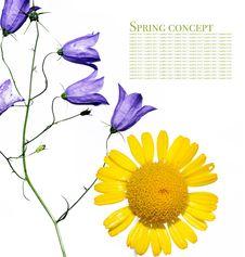 Free Flora Stock Photo - 9250640