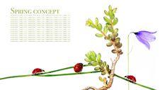 Free Flora And Ladybird Royalty Free Stock Photos - 9250838
